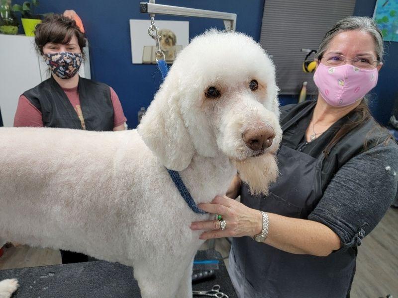 Nancy's Dog Grooming